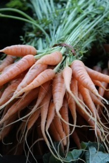 raw bunch of carrots for healthy school lunches